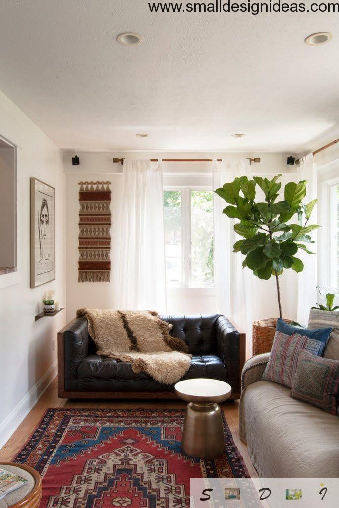 Big green plant in the eclectic interior of the living room