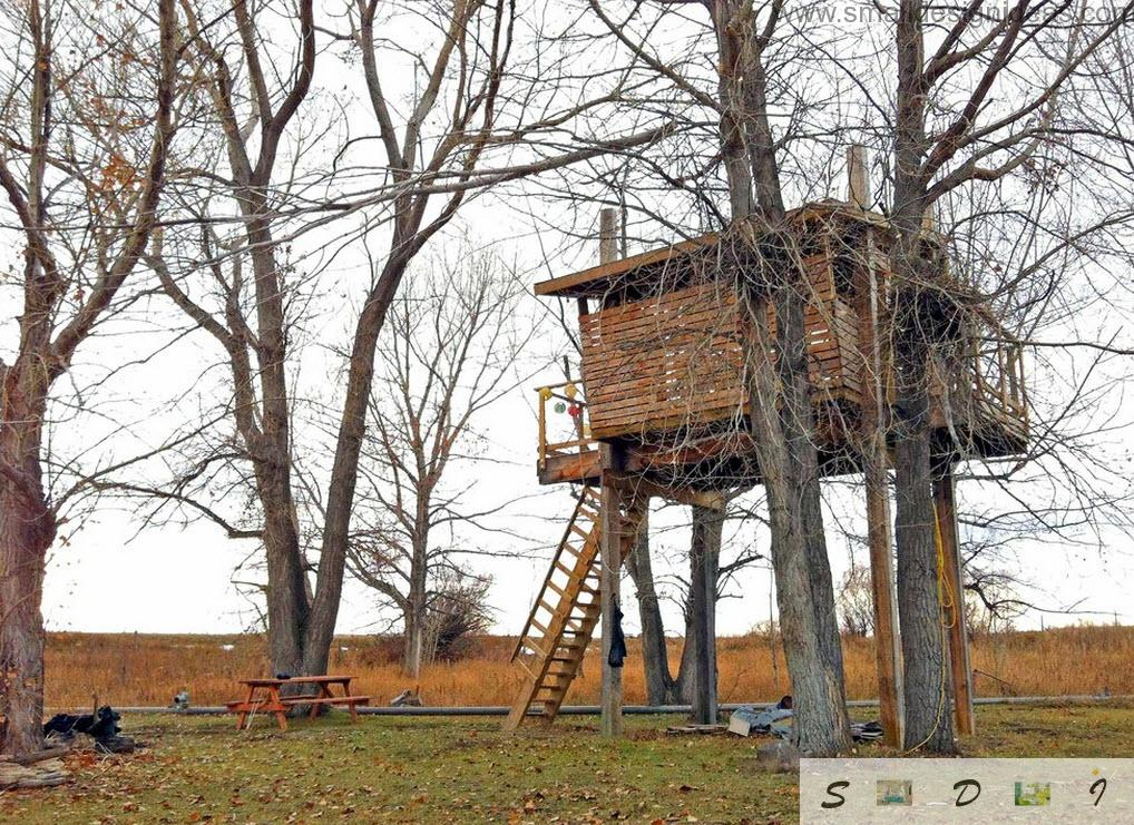 Universal Tree House Designs Photos collection in the fall
