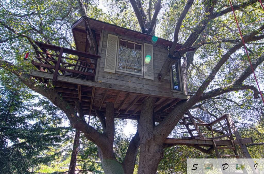 Suspended tree house in dark paneled design between the branches