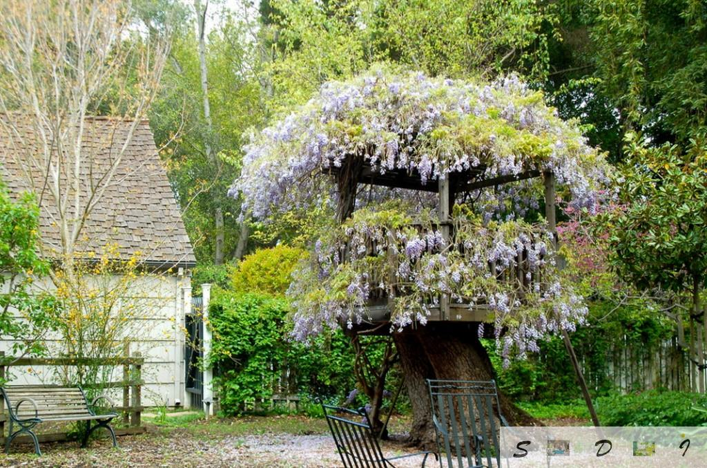 Flower arbor design idea on the cutted down tree