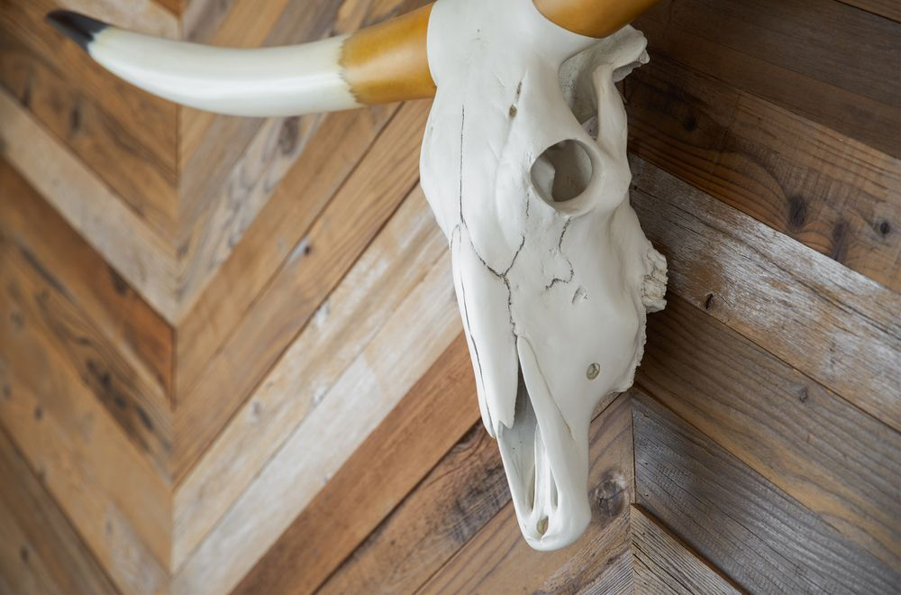 Stuffed skull of a bison in the real San Francisco country styled interior