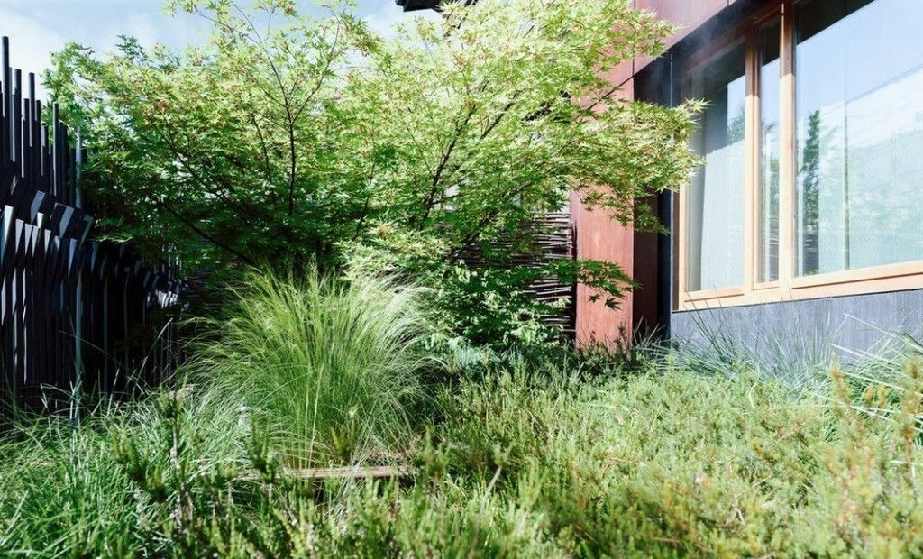 Romanian Private House Green Eco Design. Wild thicket at the backyard
