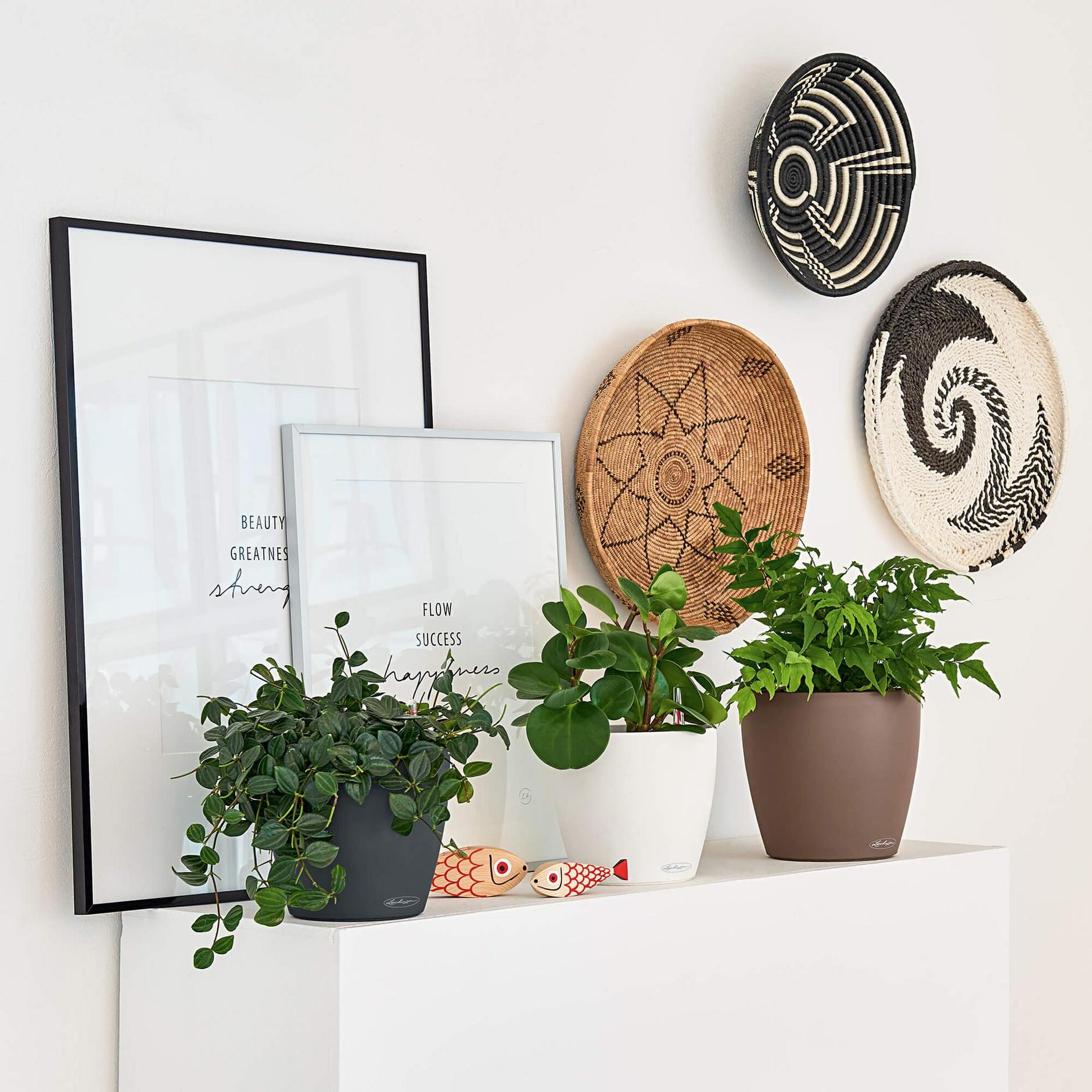 Fresh minimalist European decor with plates and plants in pots