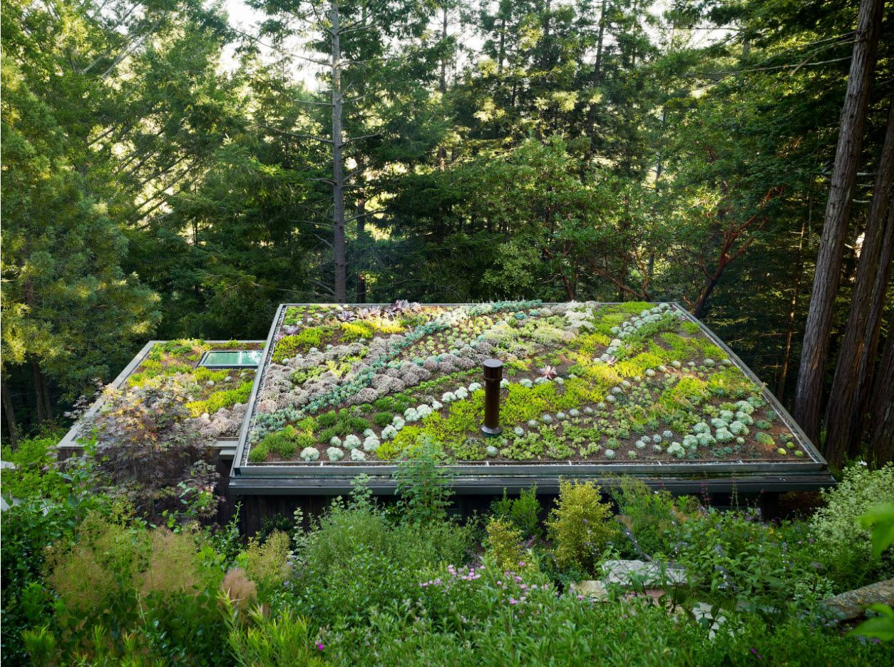 Gorgeous landscape design right at the privat ehouse's shed roof