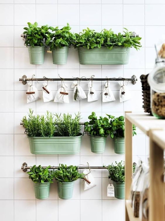 Couple of level of living plants at the kitchen