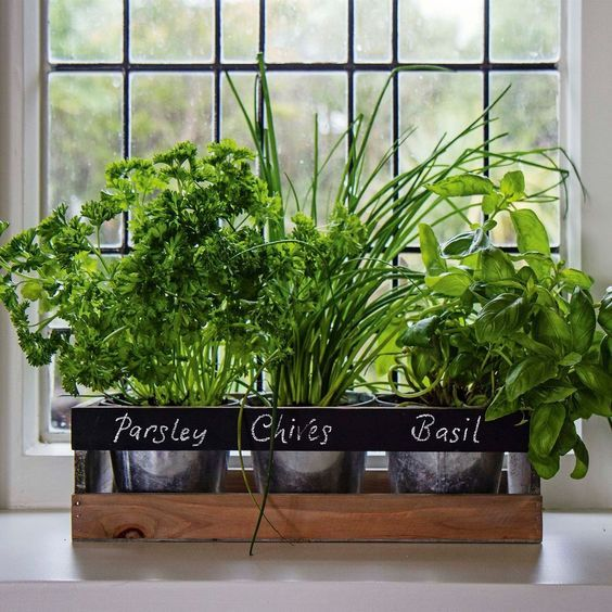 Plants at the window sill