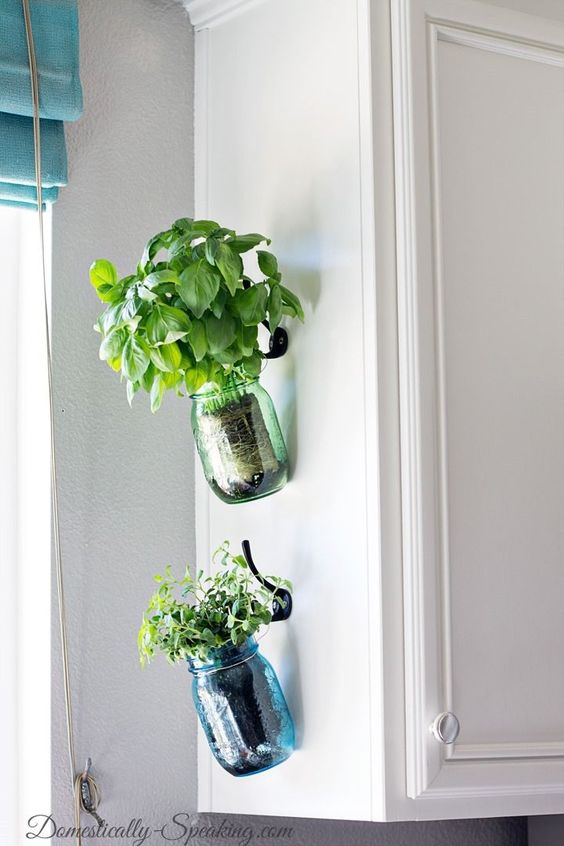 Mere glass cans for plants