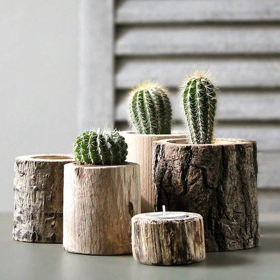 Tree trunks as the cacti stands