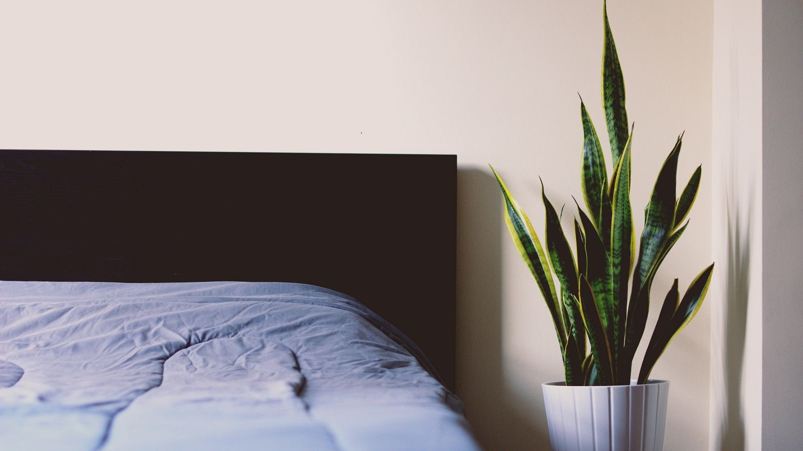 How Including Plants in the Bedroom Can Improve Sleep Quality. Plant in white vase next to the bed