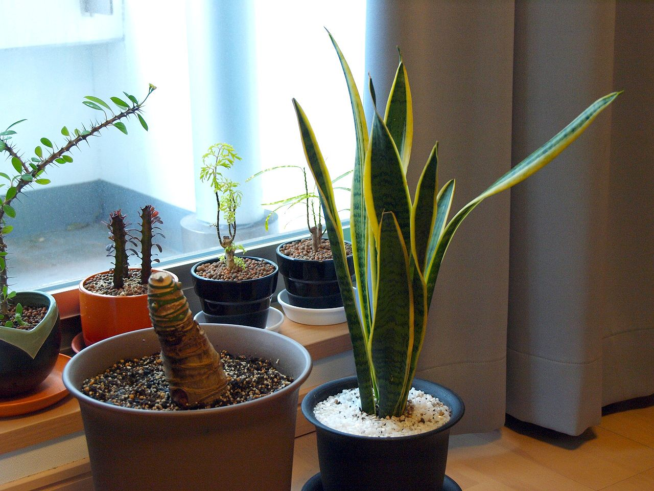 How to Improve Air Quality in Your Home (and Why You Should). Plants at the windowsill