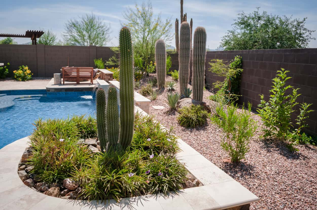 Best Landscape Design Ideas: Decorating Your Courtyard. Cacti near the pool