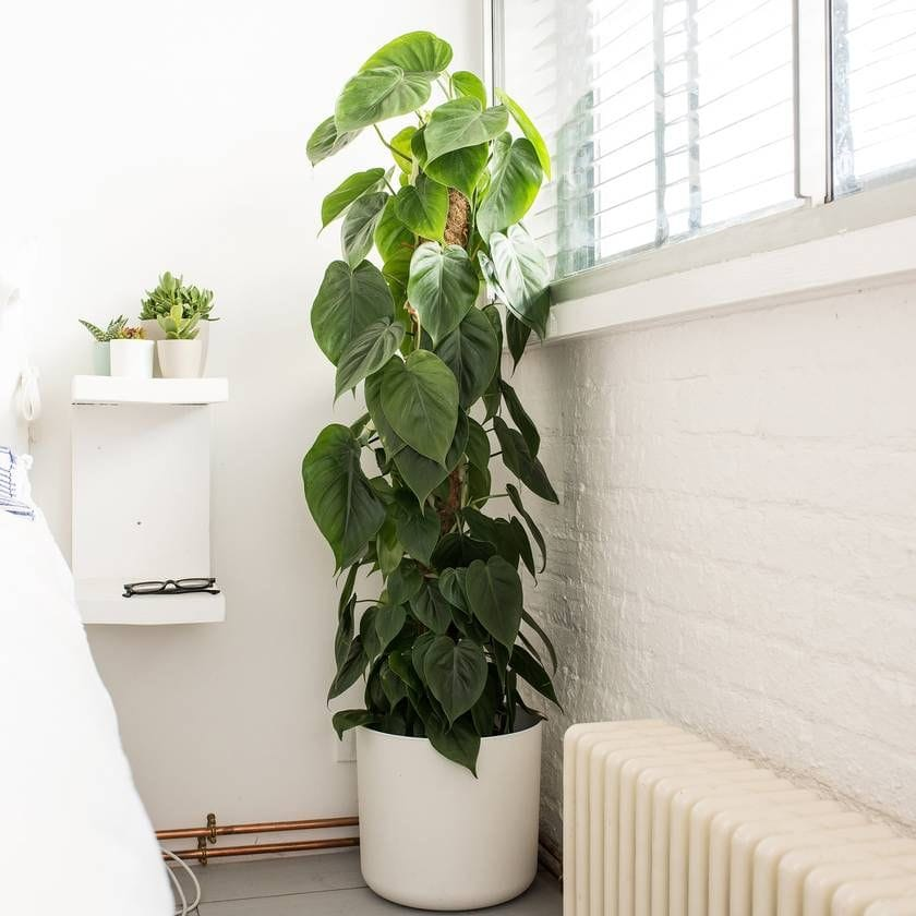 White balcony with filodendron