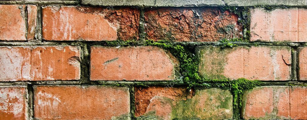 5 Problems That Can Cause Lasting Damage To Your Home. Mold and fungi at the exterior wall