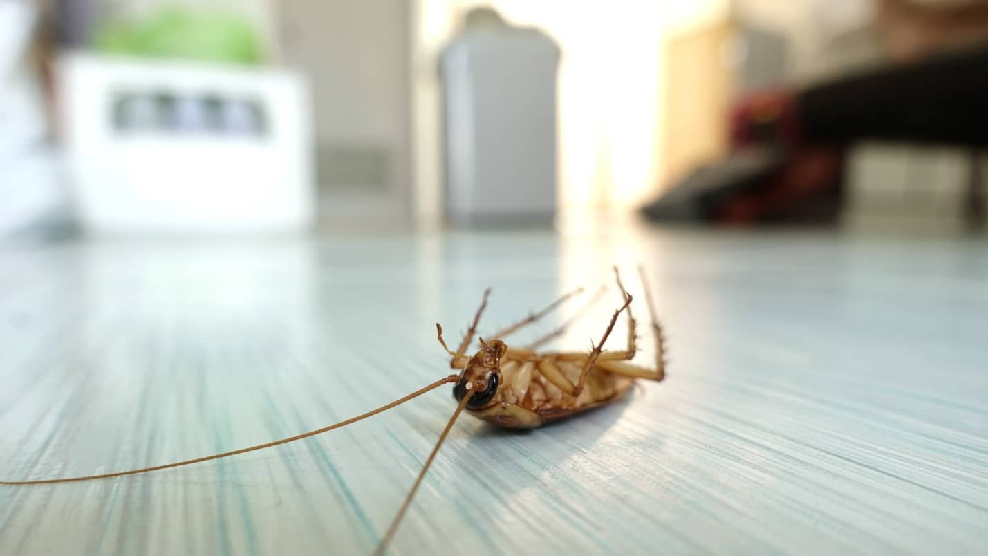 5 Common Household Pests and How to Keep Them Away. Dead cockroach on the floor