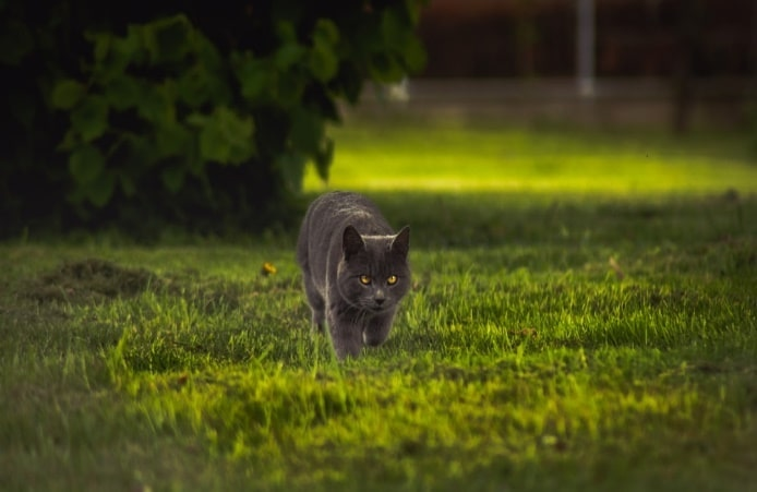 Extremely Easy Yard Lighting Tips. The cat strolling down the yard