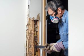 Signs You Have a Termite Infestation in Your Home. Professional is doing work of pest control