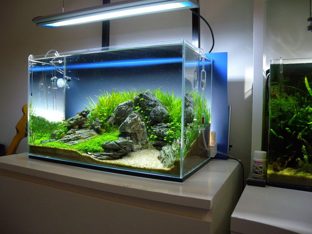 Modern designed aquarium for bedroom
