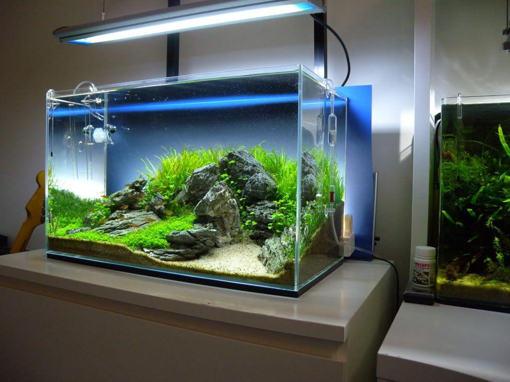 Modern designed aquarium for bedroom