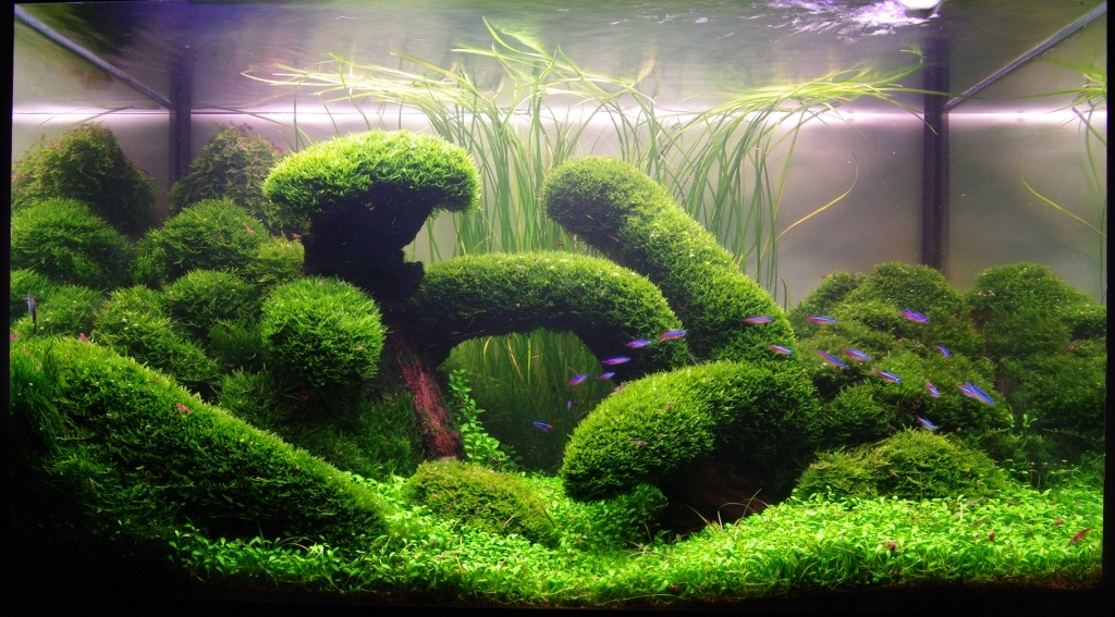 Wooden decoration with moss for aquarium