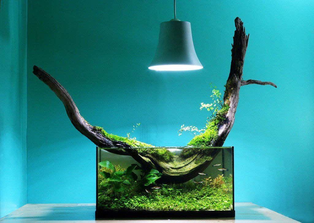 Ultramodern and stylish aquarium decoration with huge snag and lamp over it