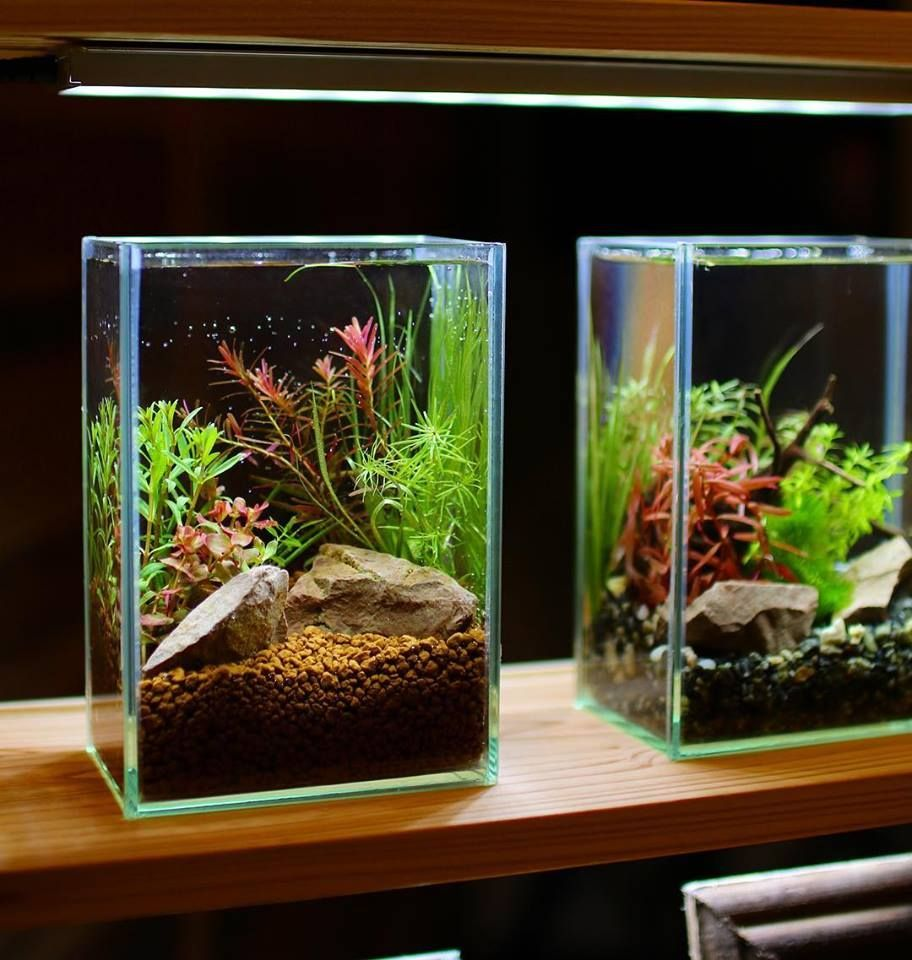 Two small aquariums on the table