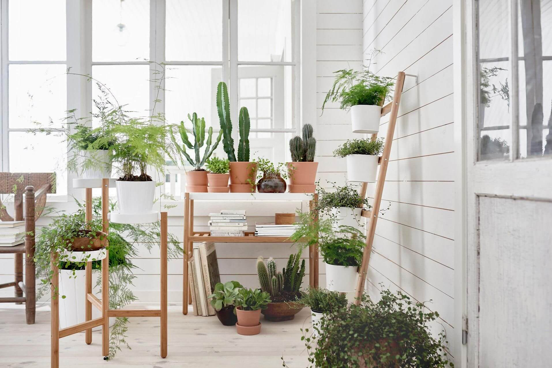 A whole greenhouse in the white interior with different wooden flower stands