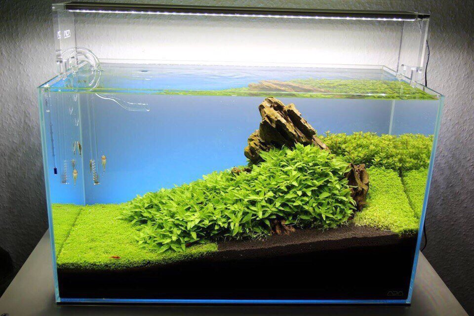 Simple aquarium decoration with couple of plants and a snag