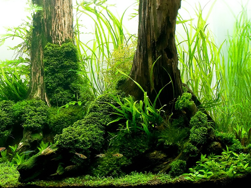 Undewwater wood surrounded by aquatic plants
