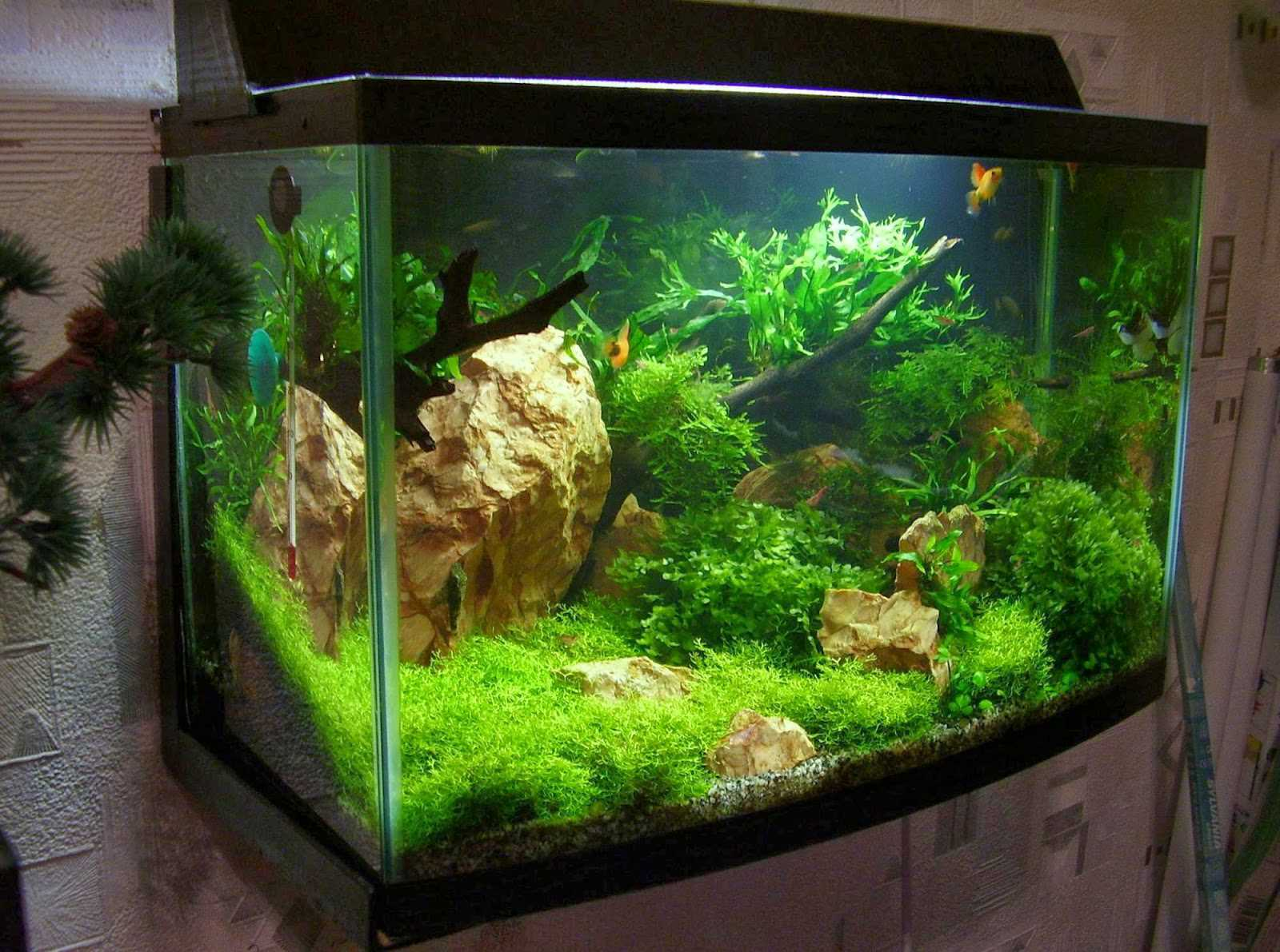 Moss overgrown aquarium with sandy colored stone