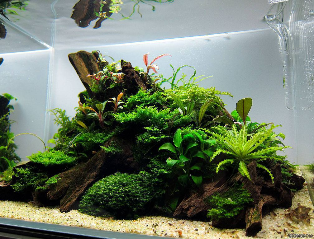 Modern aquarium decoration of plants and wood at the white background