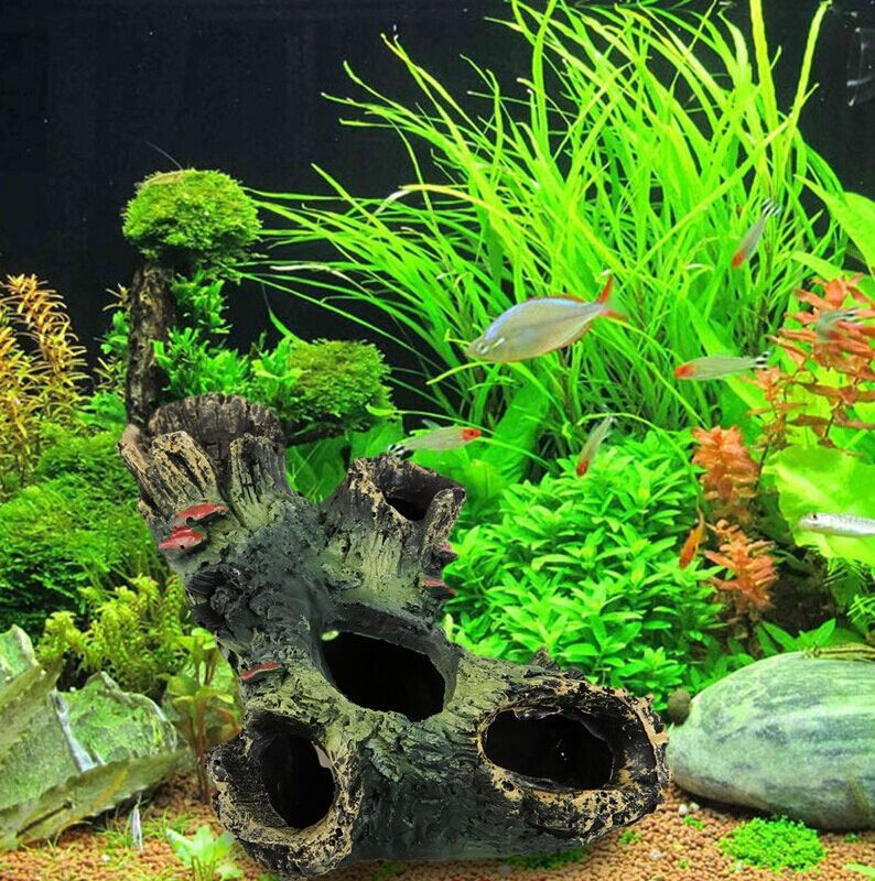 Juicy greenery for aquarium with many species