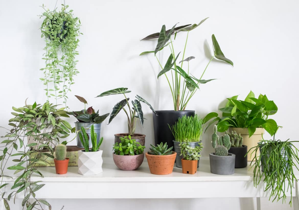 Caring about Health: Easy Ways to Humidify Your Home. Greenery in totally white room