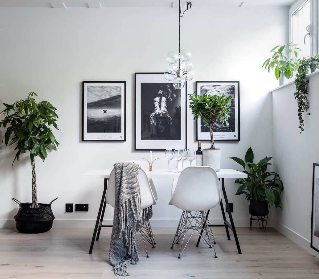 Seasonal Cleaning Tips. White casual room with plants all around