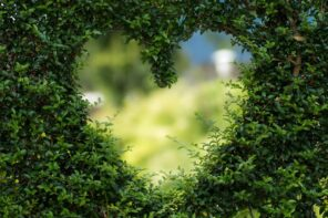 Wooded Magic: Tree Landscaping Ideas for Shabby Chic Backyards. Heart symbol sawn out of the bush