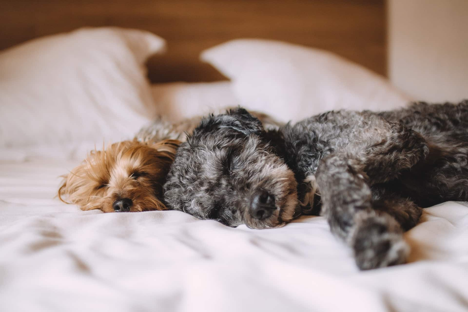 Top 5 Benefits from Using Suitable Mattresses for Your Body. Sleeping dog