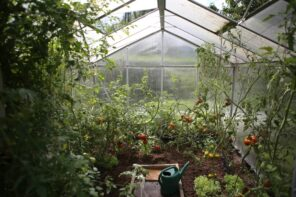 How to Choose the Right Type of Greenhouse for Your Garden? Simple constructed PVC film tent with tomatoes