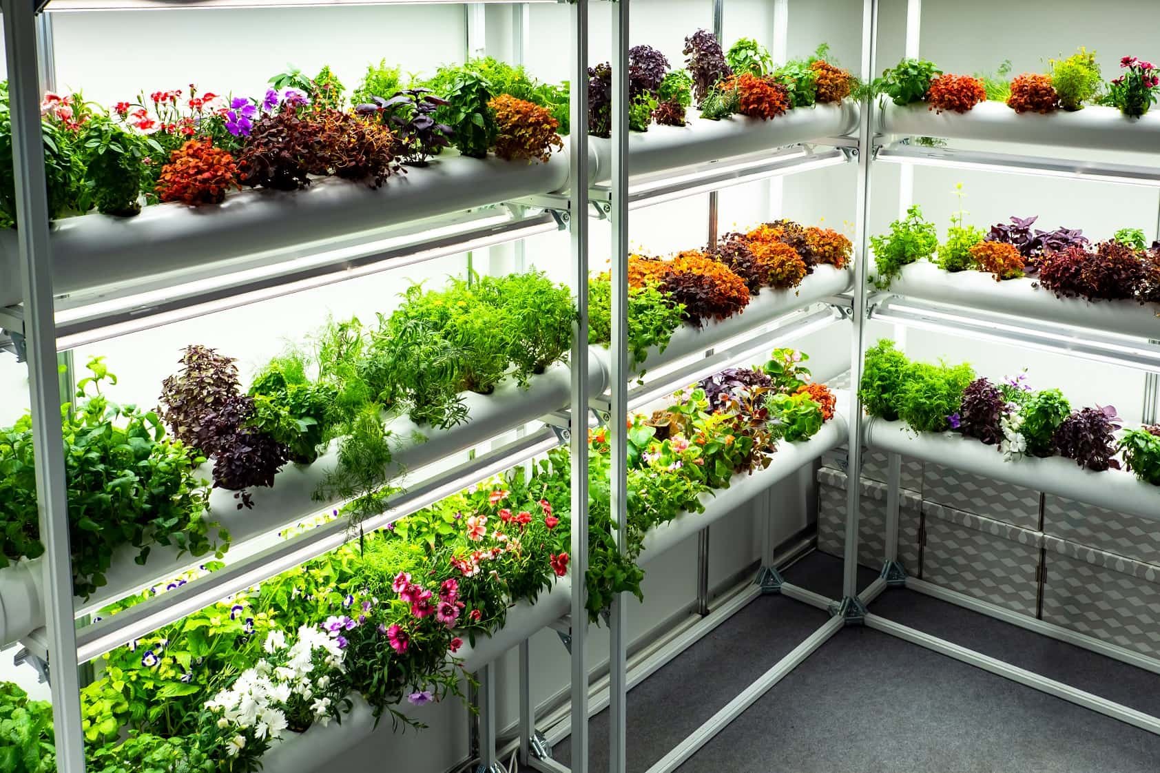 6 Benefits Of Having A Small Greenhouse In Your Home. The flowers and plants at the rack