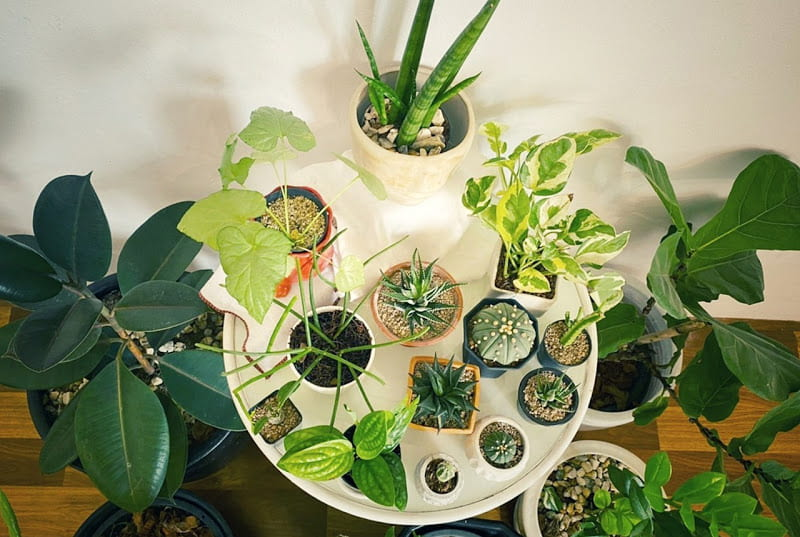 5 Useful Tips on How to Cherish Your Indoor Plants. A large amount of pots on the round table