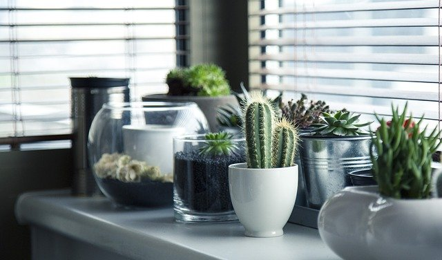 Understanding the Importance of Home Decor. Live decorations at the windowsill