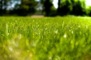 How to Strategically Use Turf Grass in Your Lawn. Close up of the greengrass