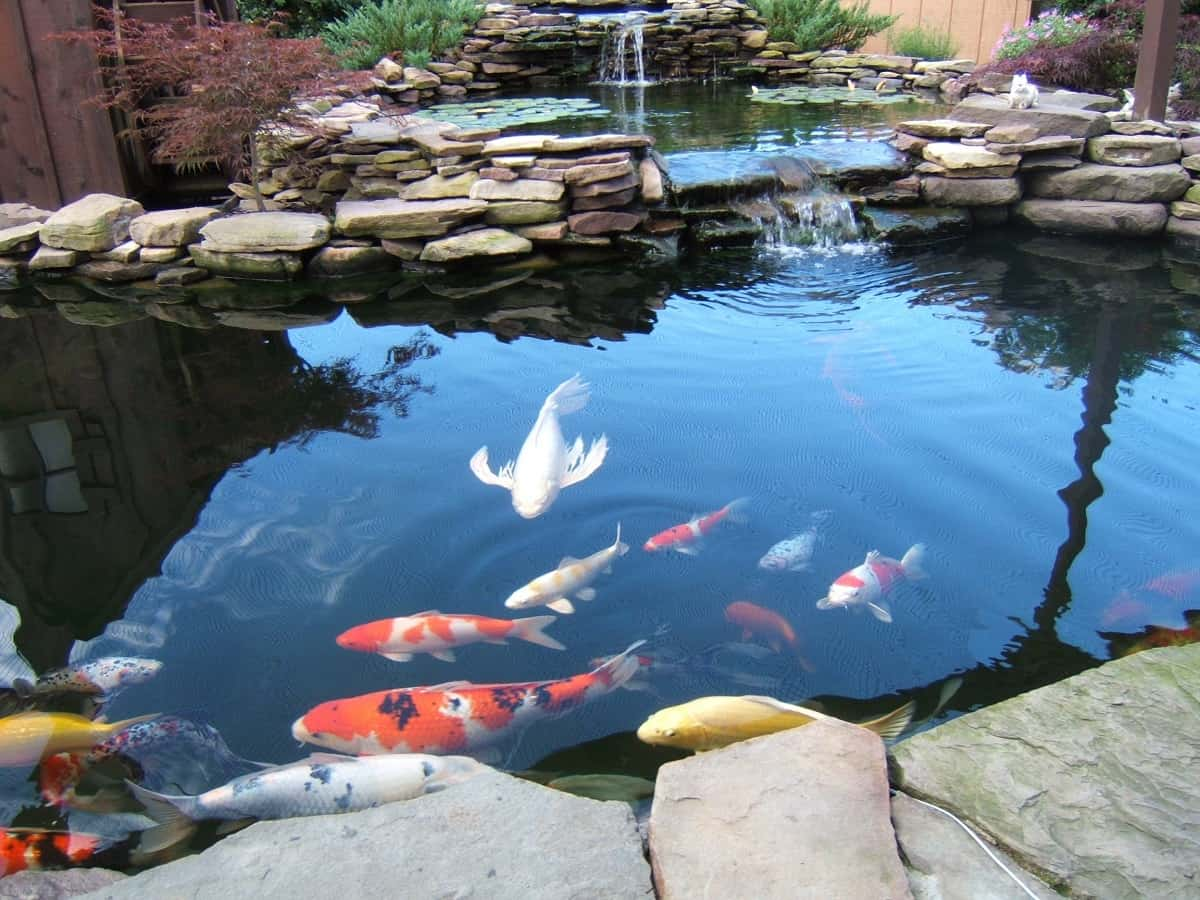 6 Unique Additions to Your Home that Boost Moods. Koi Pond