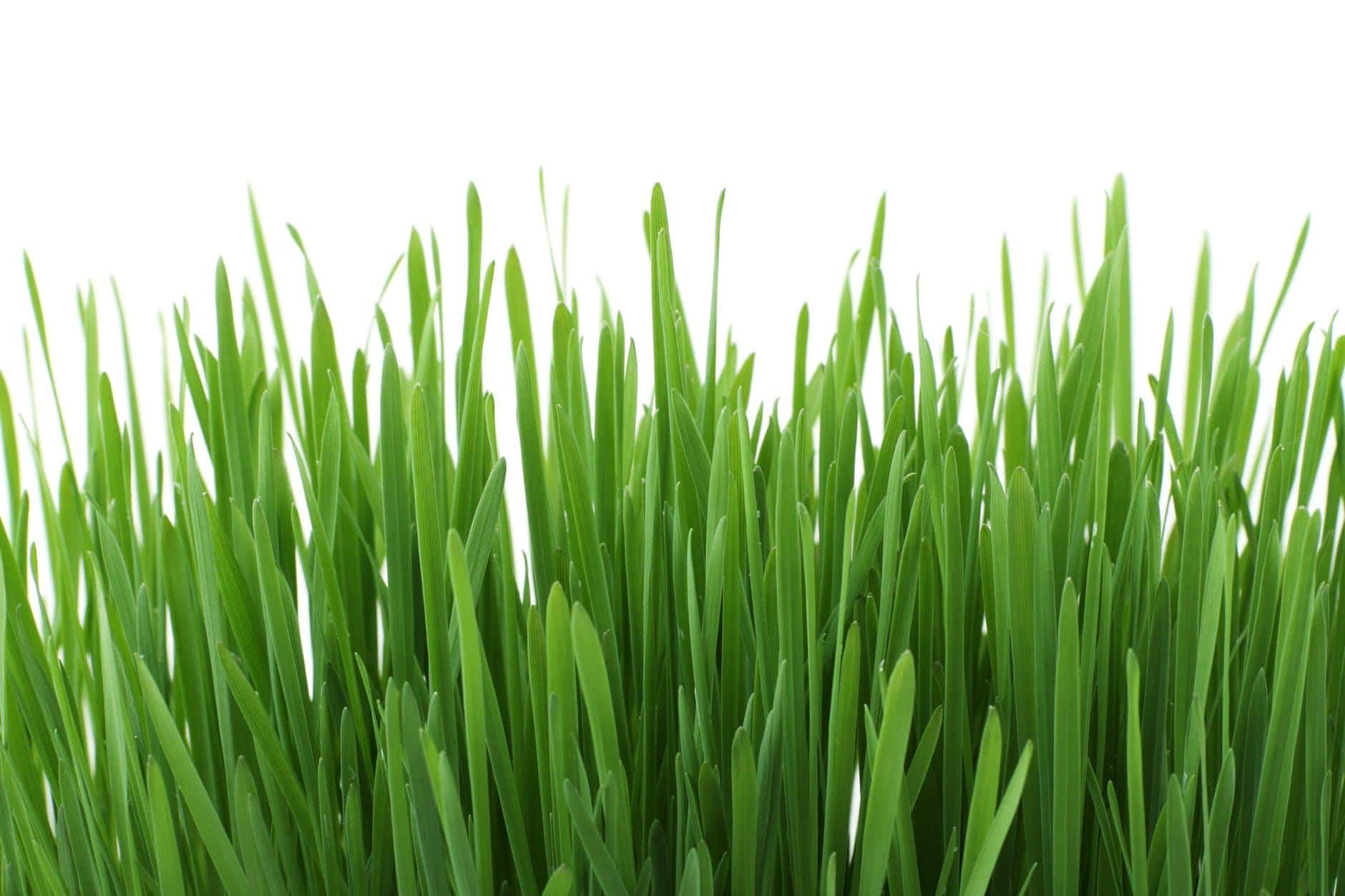 Handy Tips On How To Install And Maintain Artificial Grass In Your Yard. Artificial blades look like natural