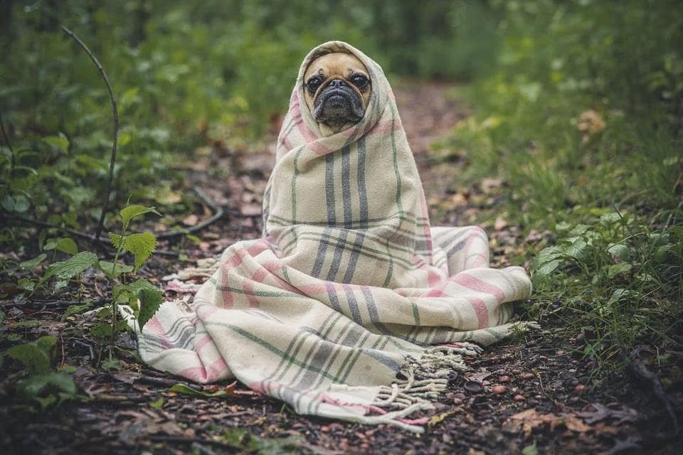 Air Conditioning Advice: Important Tips To Help You Stay Warm During Winter. Cute pug in the blanket