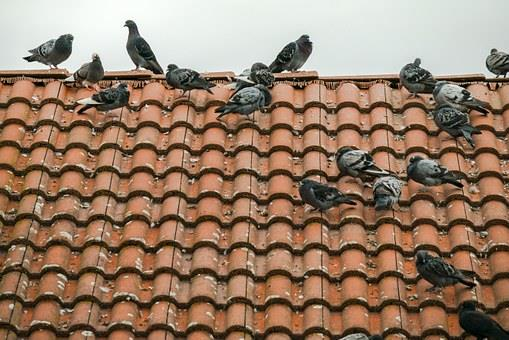 How To Restore And Repair Your Roof Without Replacing It. The doves at the roof
