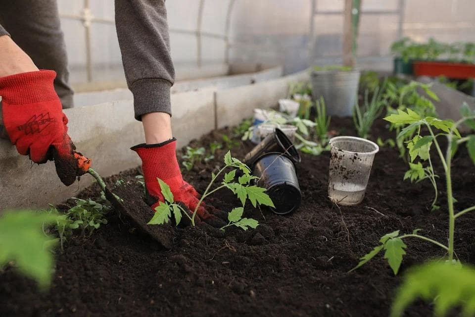 How To Choose The Right Plants For Your Garden. Loosening of the soil around the plants