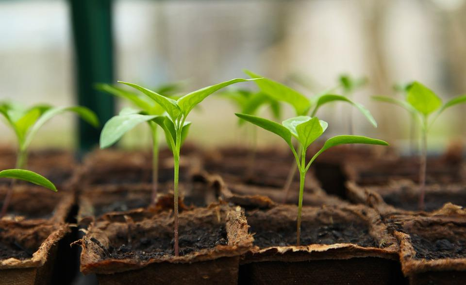 How To Choose The Right Plants For Your Garden. Breeding the plants