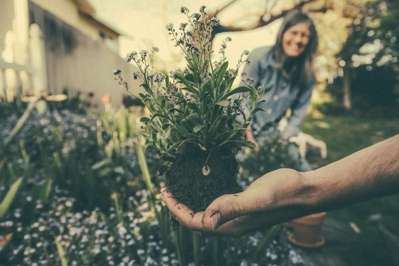 How To Find The Top Gardening Gear And Make Your Job Easier. The plant in soil